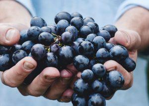Nebbiolo, een druif met veel potentie (4 punten cat. A)
